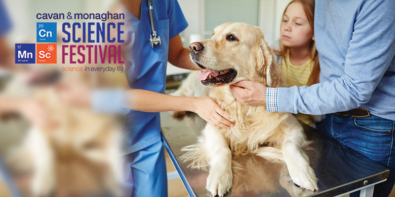 You, Your Dog and Arthritis: Dog Physio Workshop