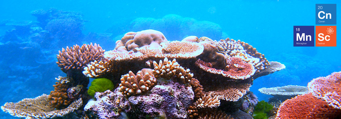 Precious Corals, Jewels of the Ocean - Ballybay, 15th Nov, 4pm